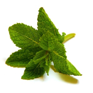 mint_leaf.151140938_std